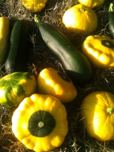 Summer squash is hard to grow organically.